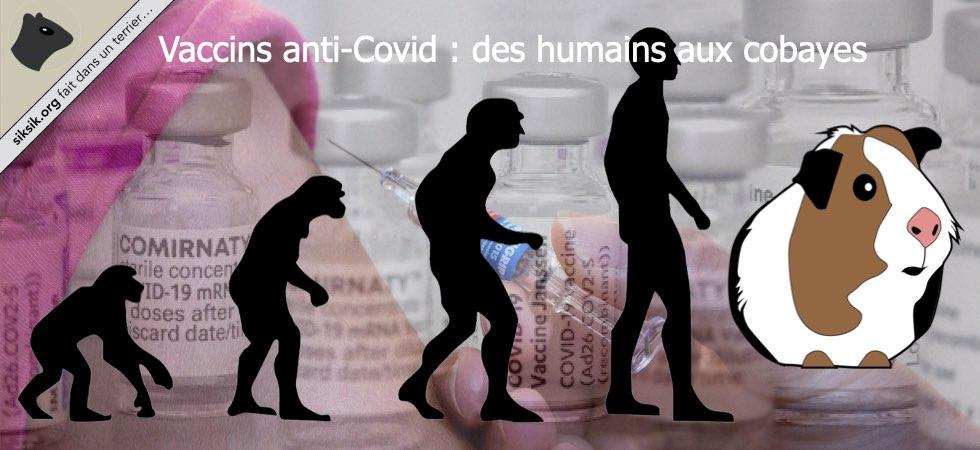 Vaccins anti-Covid : des humains aux cobayes